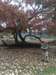 Fallen Tree F in12-2015