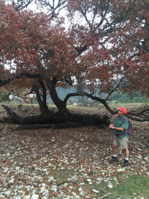 Fallen Tree F in 12-2015