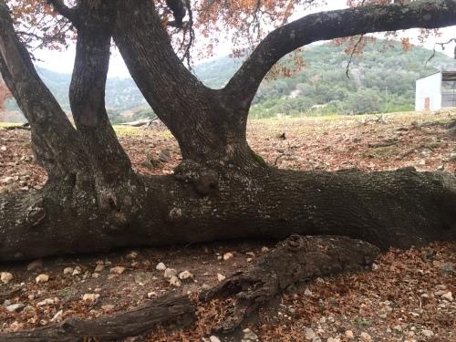 Fallen Tree D in 12-2015