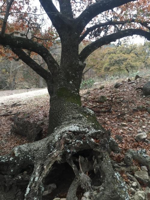 Fallen Tree B in 12-2015