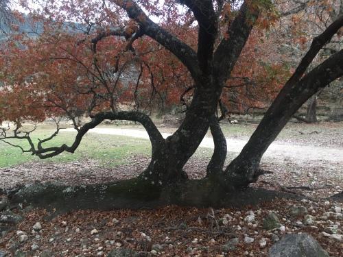 Fallen Tree A in 12-2015