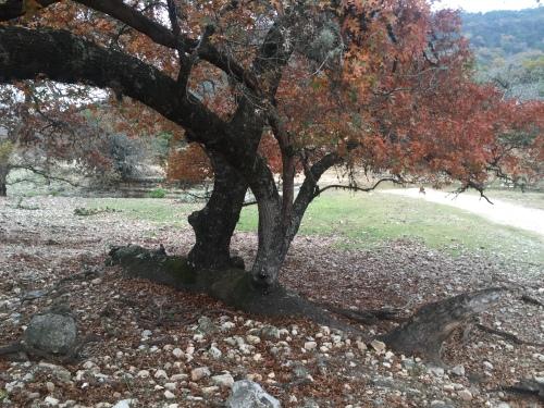 Fallen Tree E in 12-2015