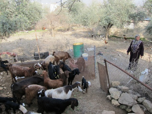 Two goats have become many to help a family in need.