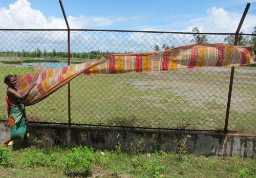 Sari in the Wind