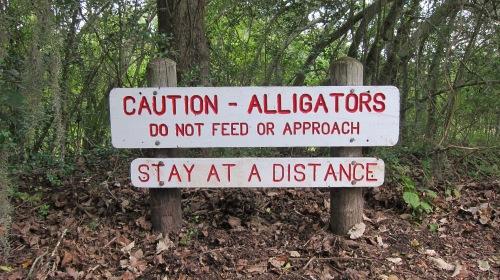 Alligators Sign copy