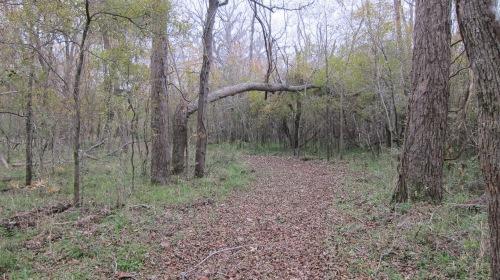 BB Creekwood Lake Tree