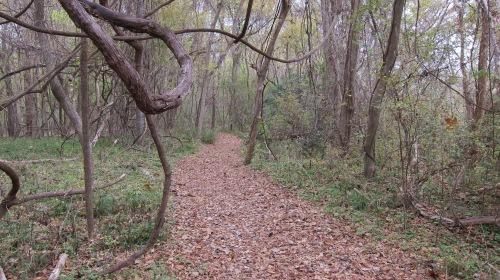 BB Red Buckeye Trail