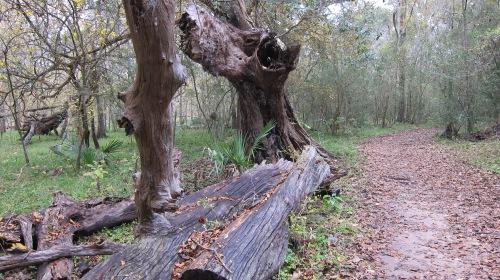 Dead Wood on Trail