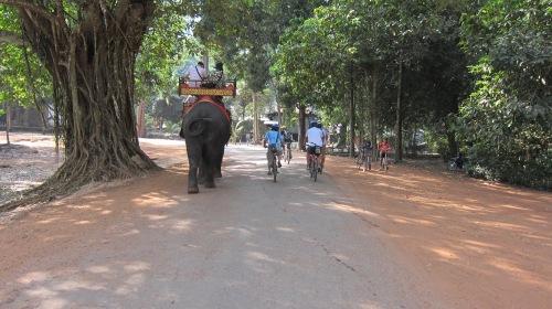 Bike Elephant