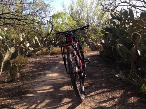 Bike Cactus