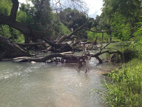 SM River Trees