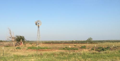 Panhandle Windmill