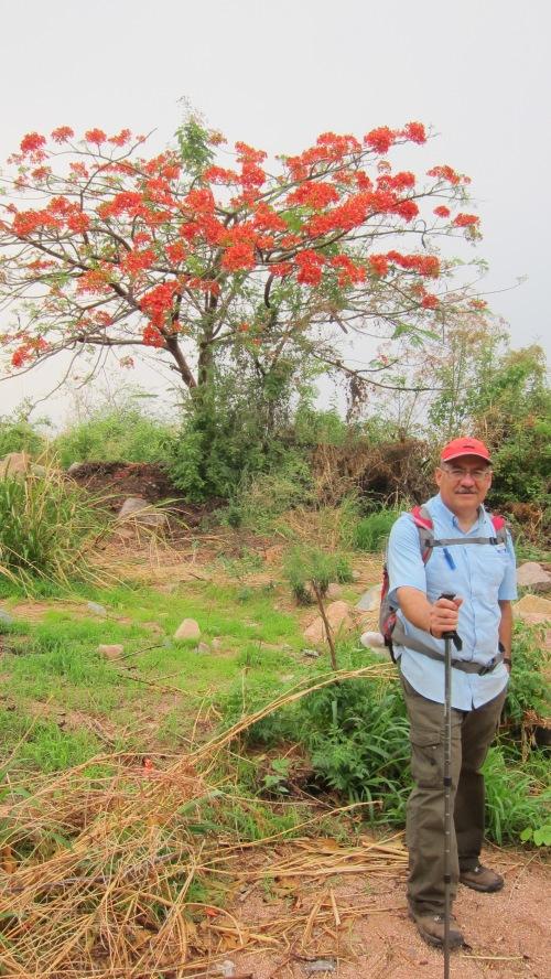 Omar & Red Tree
