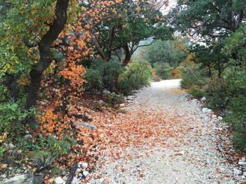 Trail at McKittrick Canyon