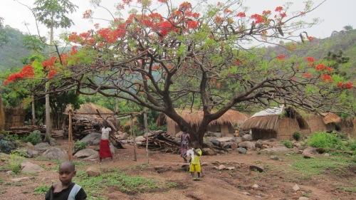 Red Tree Kids