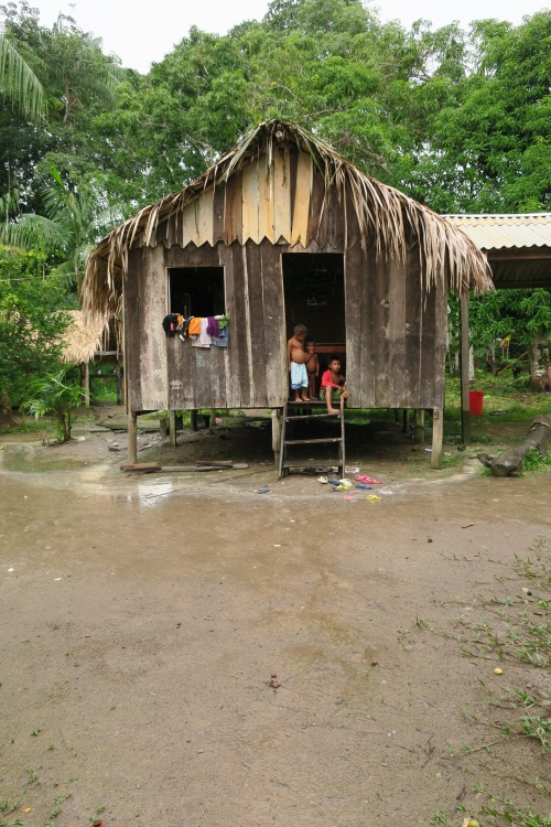 Amazon Hut