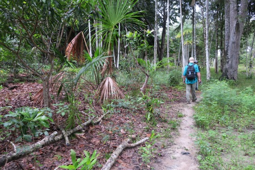 Amazon Jungle Trail