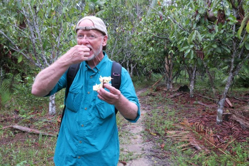 Jay Eating in Jungle