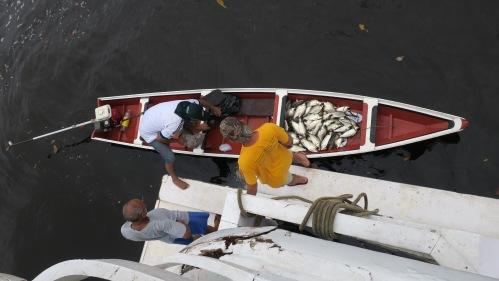 Munduruku Fisherman