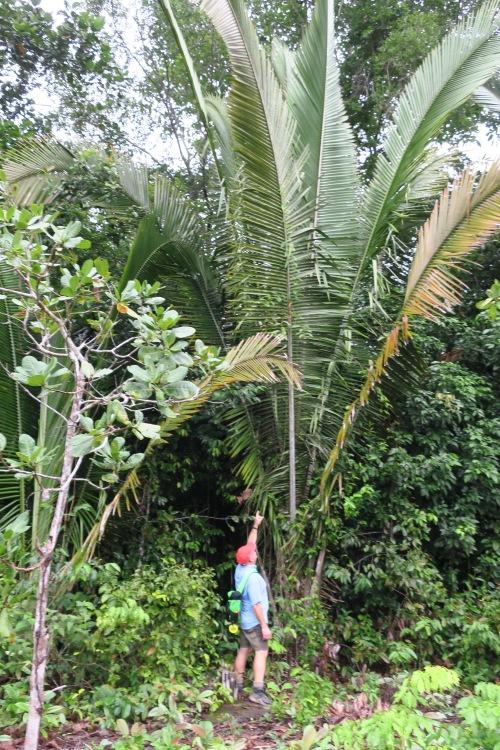 Omar w Palms