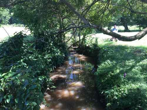 el-maderal-stream