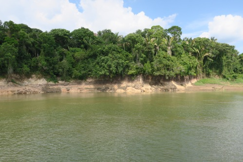 Along the Amazon